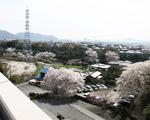 屋上からの眺望